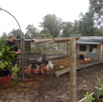 Kerr Sustainability Centre Community Garden